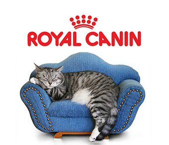 "Разработка периодического издания ""Royal Canin"""